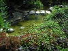 waterfall_with_pond_15